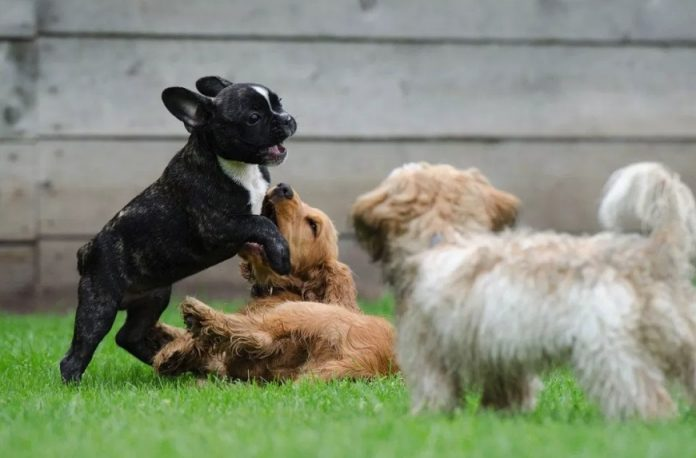 Why a Dog Daycare is a Good Idea for Your Pet