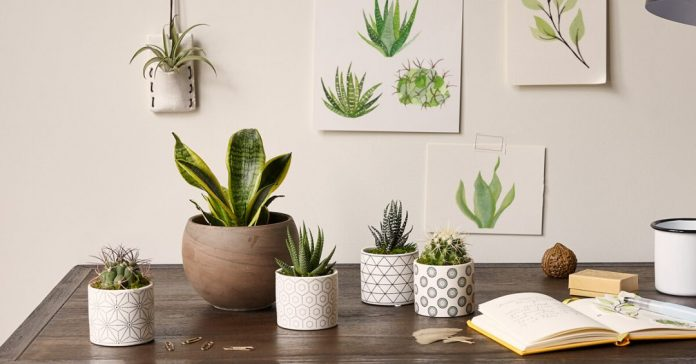 Brighten your Workspace with Indoor Office Plants