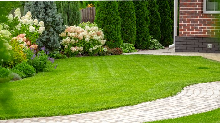 How To Keep Your Turf Green And Healthy