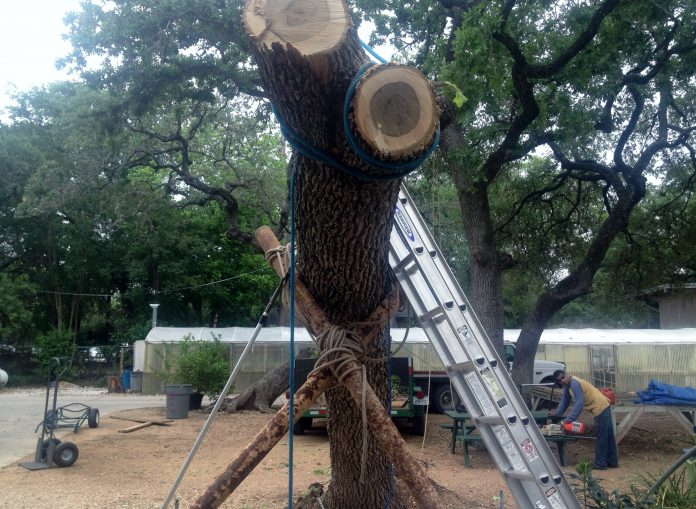 San Antonio Tree Removal Service