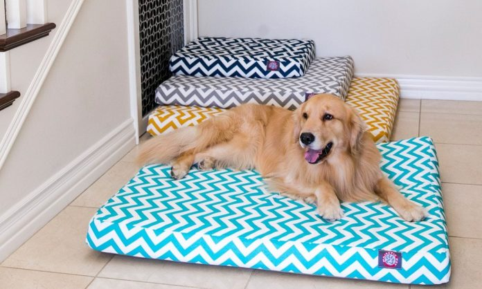 8 Tips on Buying a Large Dog Bed
