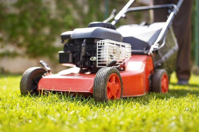 How Often Should You Cut Your Grass