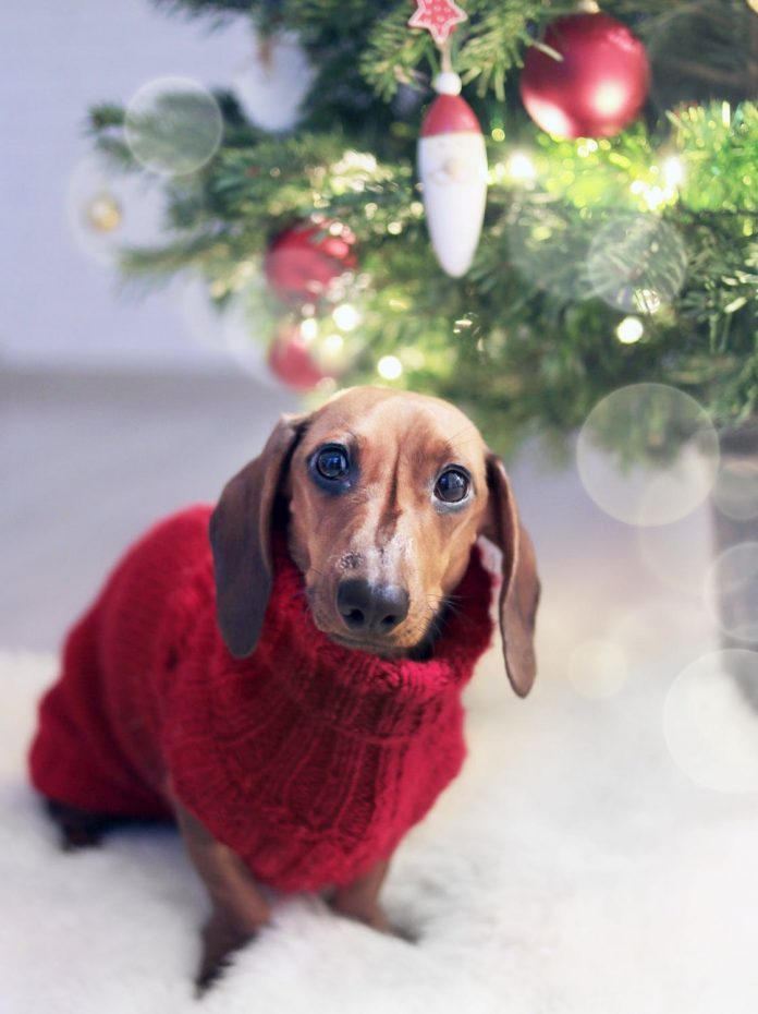 Puppy Sweaters