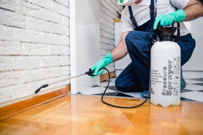How Much Does It Cost to Hire a Pest Removal Company