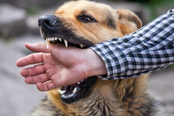 7 Key Steps to Take After Sustaining a Dog Bite Injury